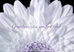 white purple bloom trinity esoterics