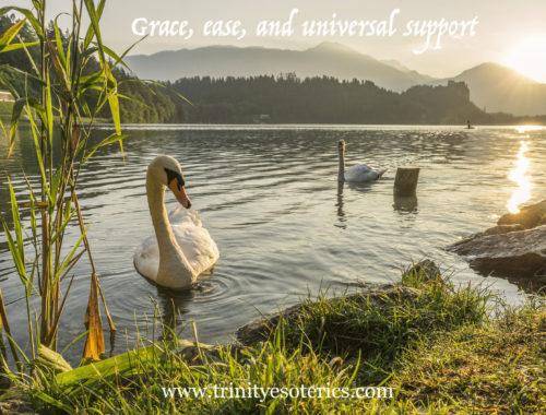 swans in gentle water trinity esoterics