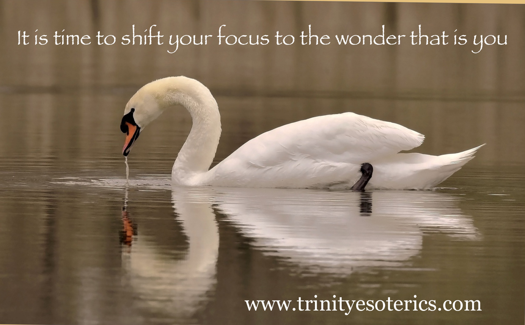 swan reflection trinity esoterics