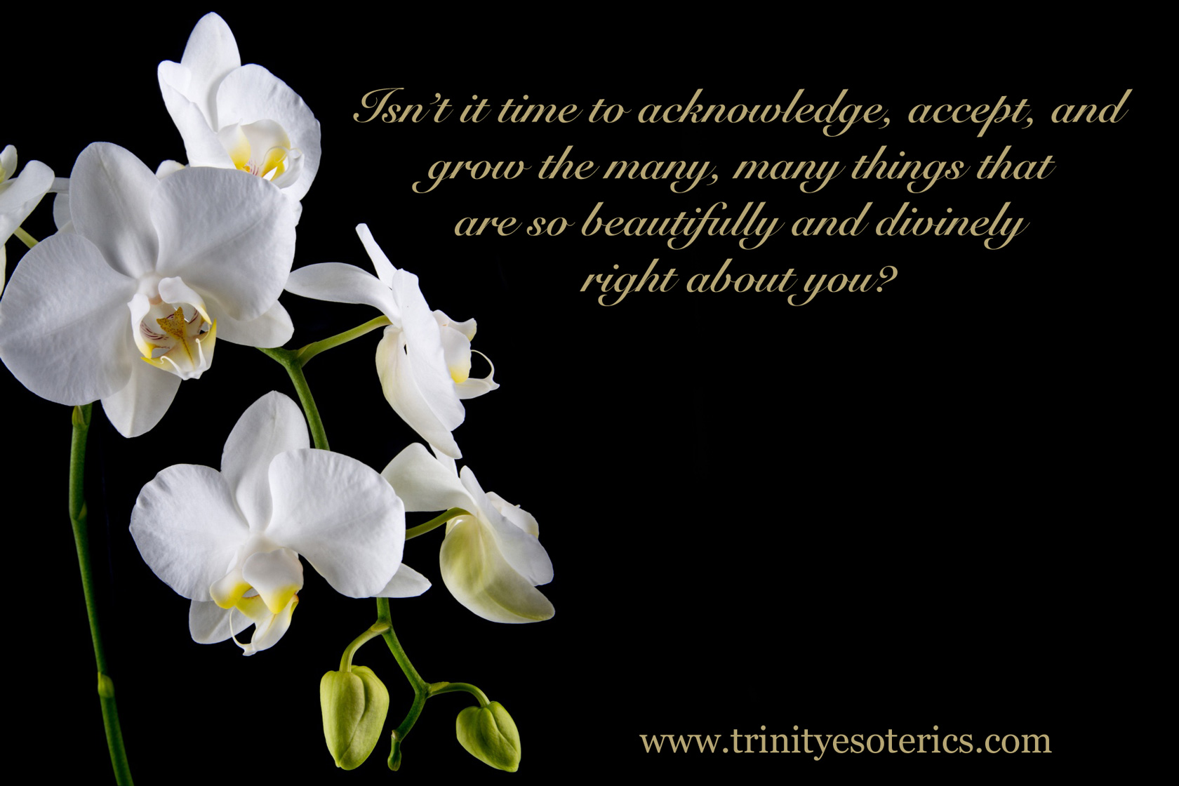 white blooming orchid trinity esoterics