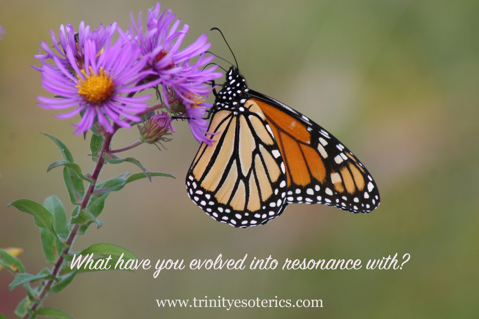 monarch butterfly trinity esoterics