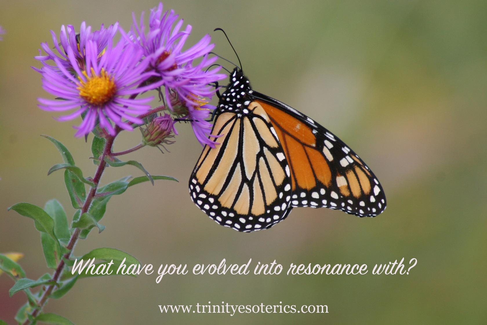 monarch butterfly trinity esoterics