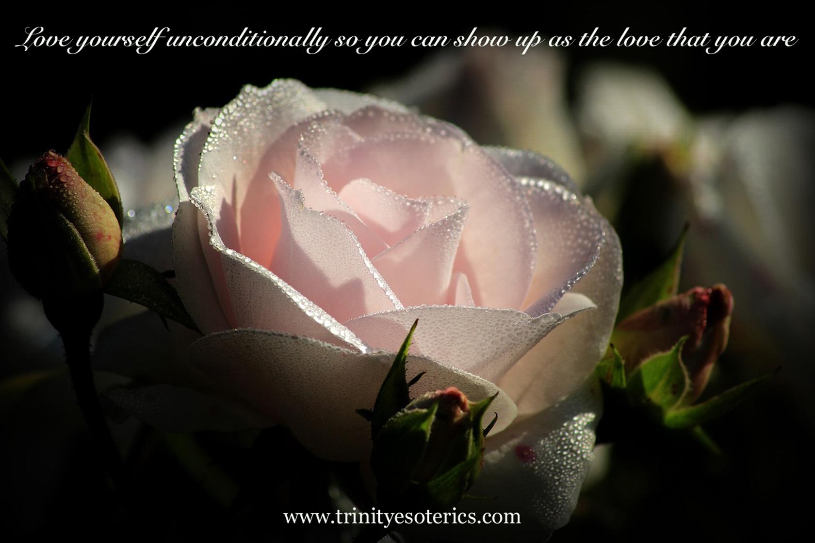 dewy pink rose trinity esoterics