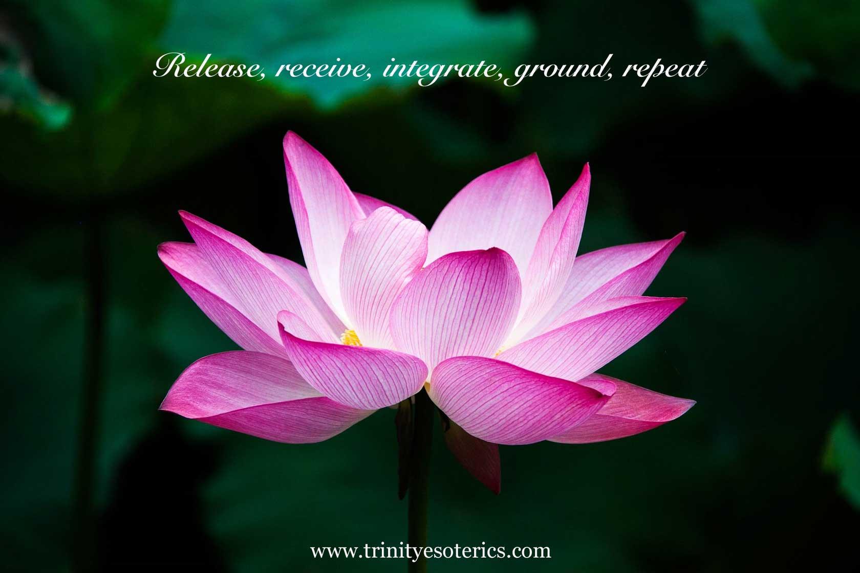 pink lotus flower trinity esoterics