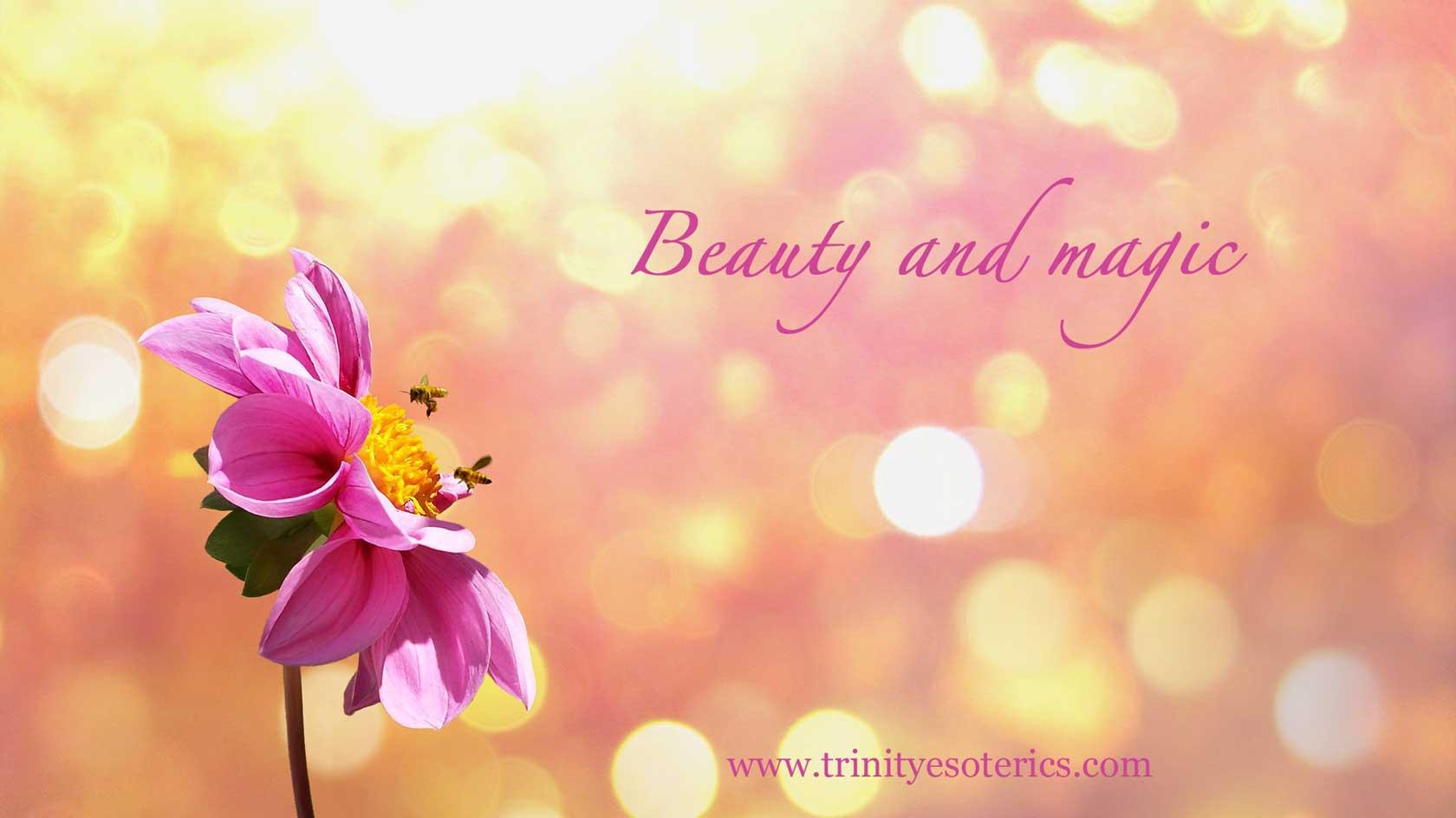 flower bloom in sunshine trinity esoterics