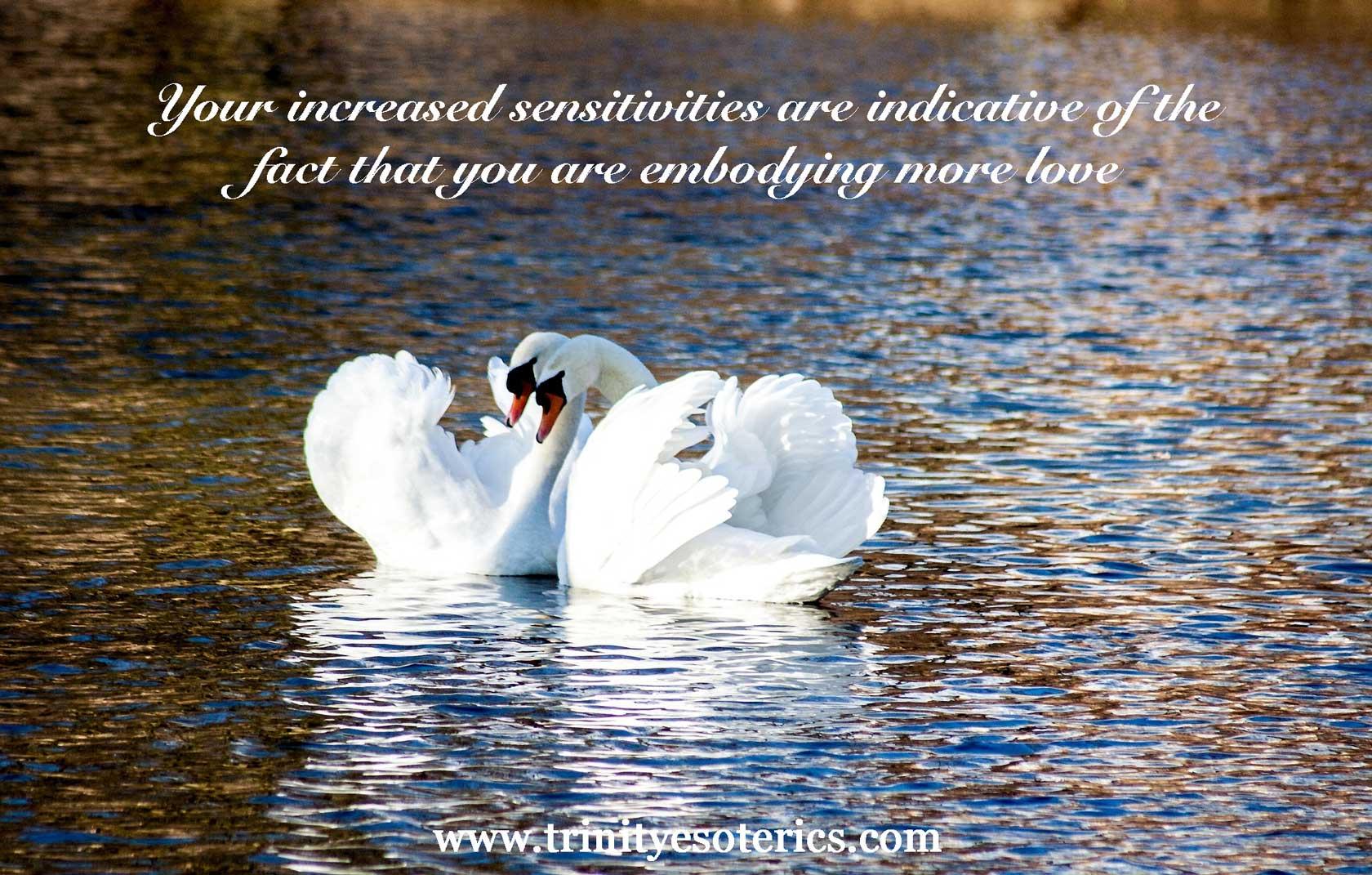 snuggling swans trinity esoterics