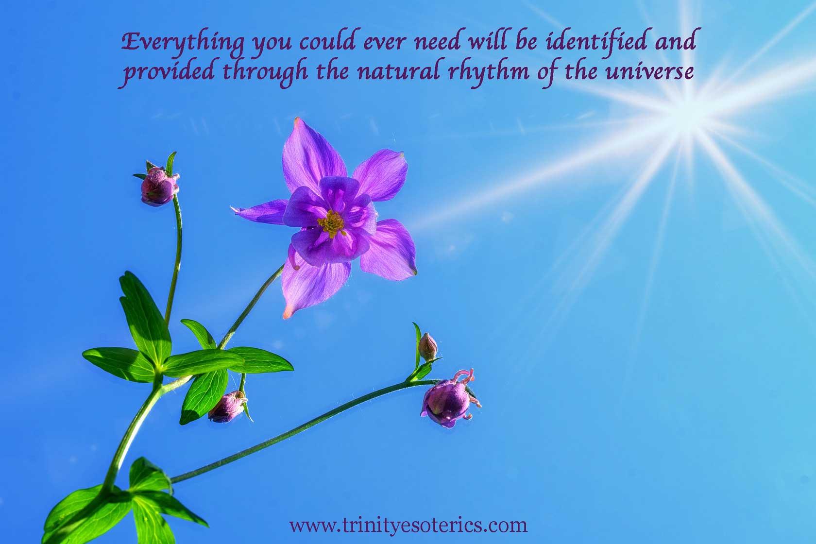blooming flower under sun trinity esoterics