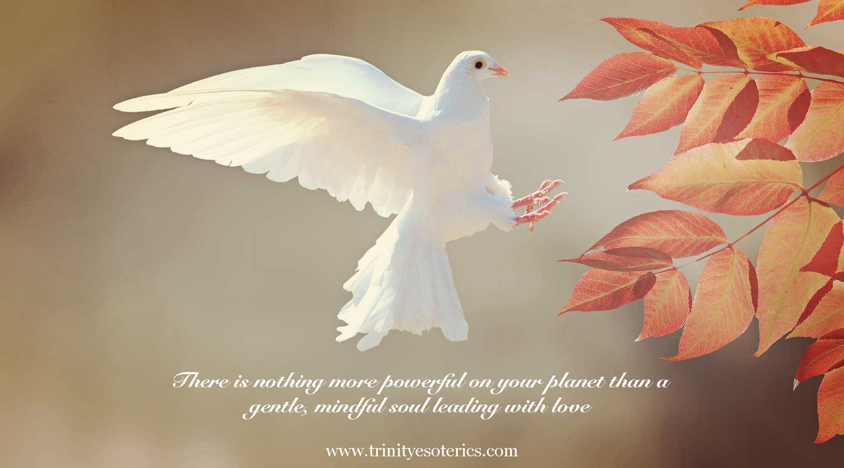 white dove trinity esoterics