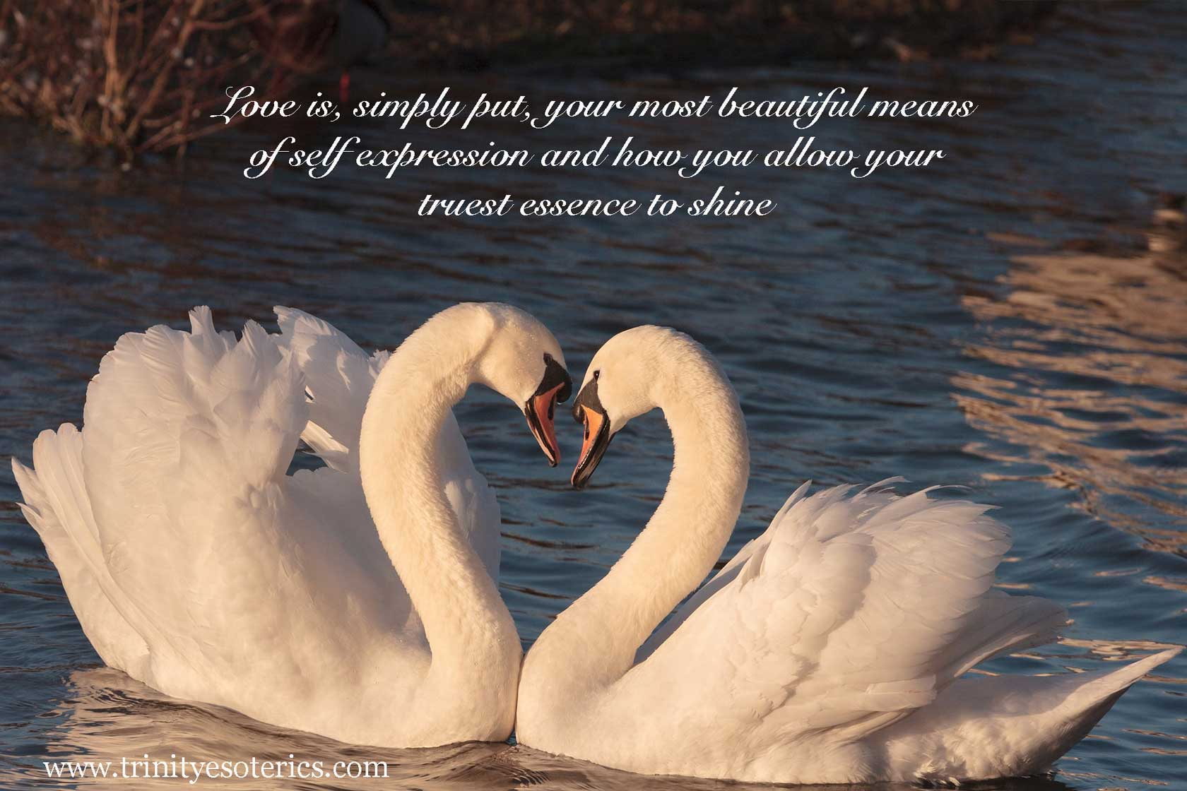 two swans trinity esoterics