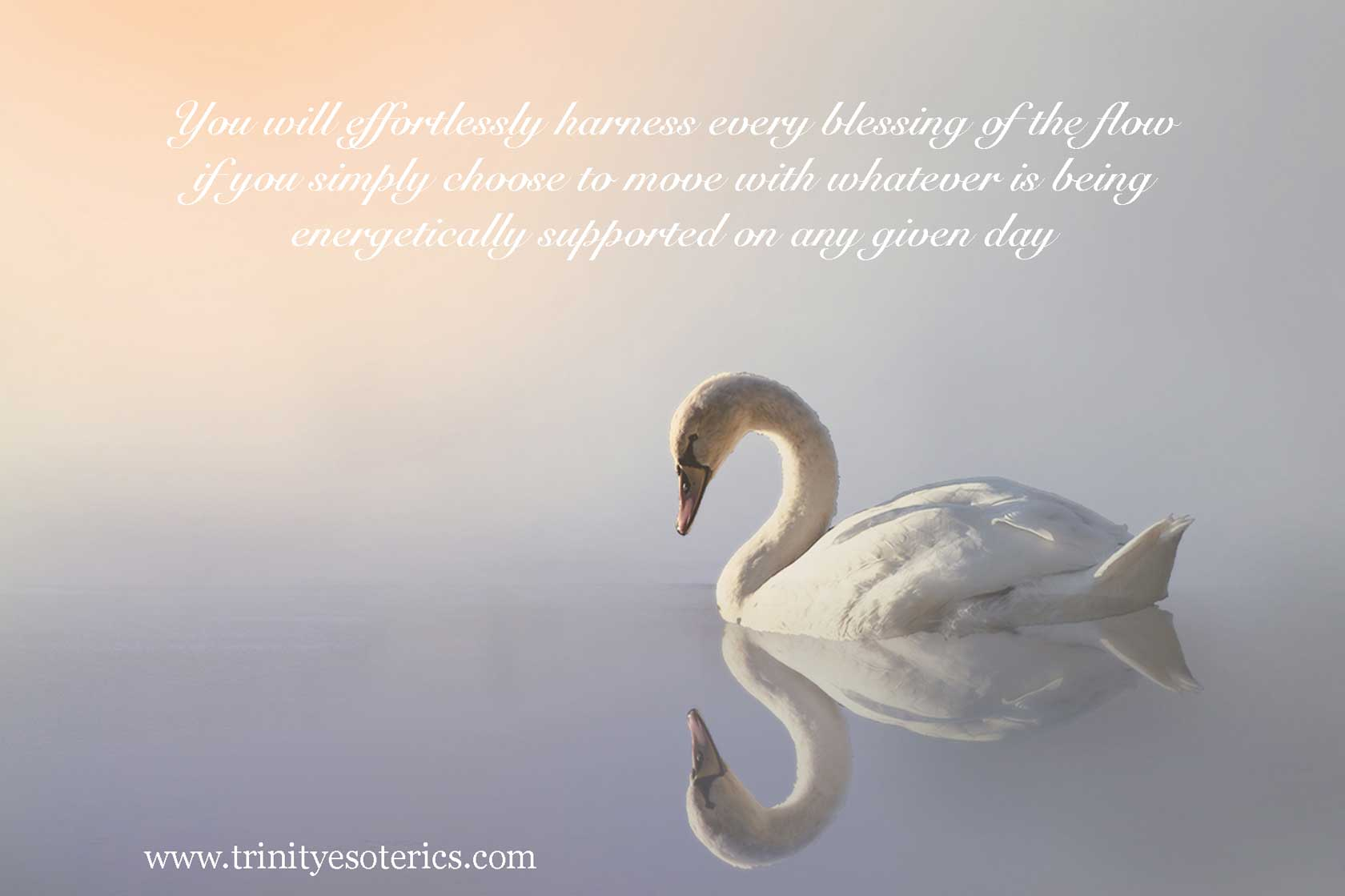 swan in calm waters trinity esoterics