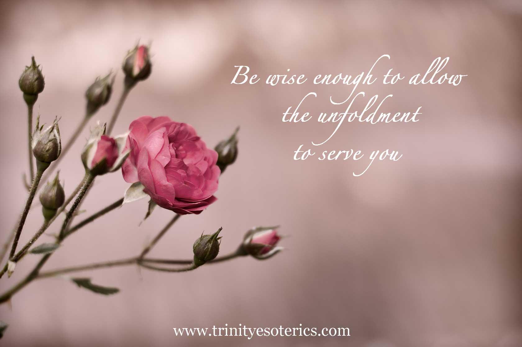 blooming rose trinity esoterics