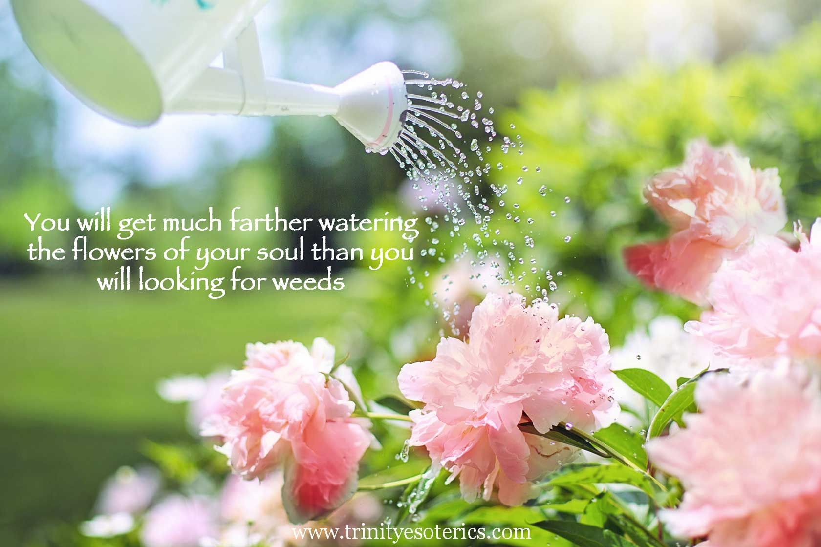 watering pink flowers trinity esoterics