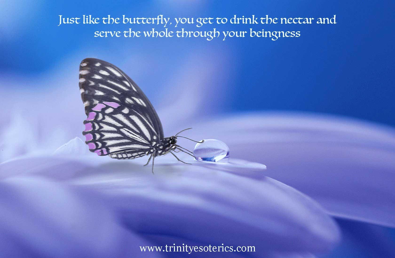 butterfly trinity esoterics