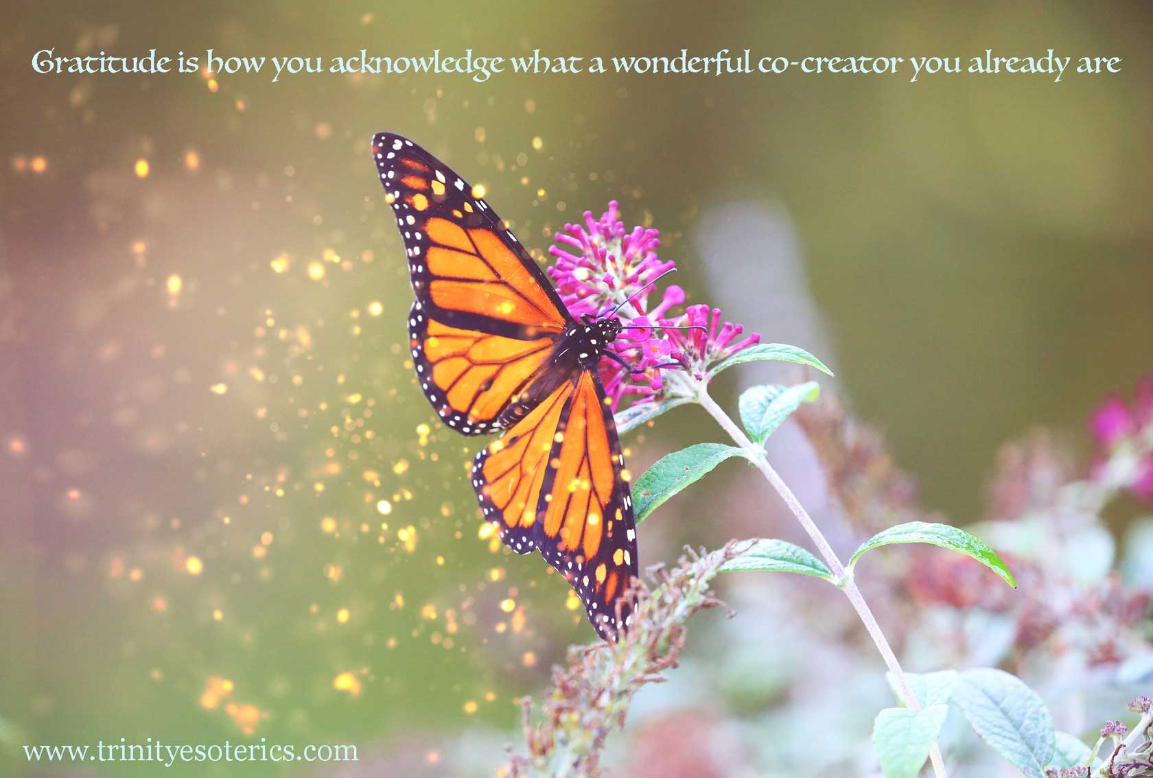 magical monarch butterfly trinity esoterics