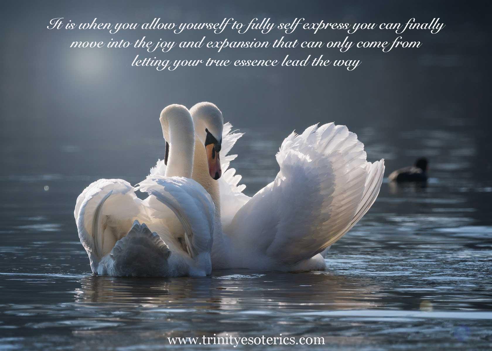 nuzzling swans trinity esoterics