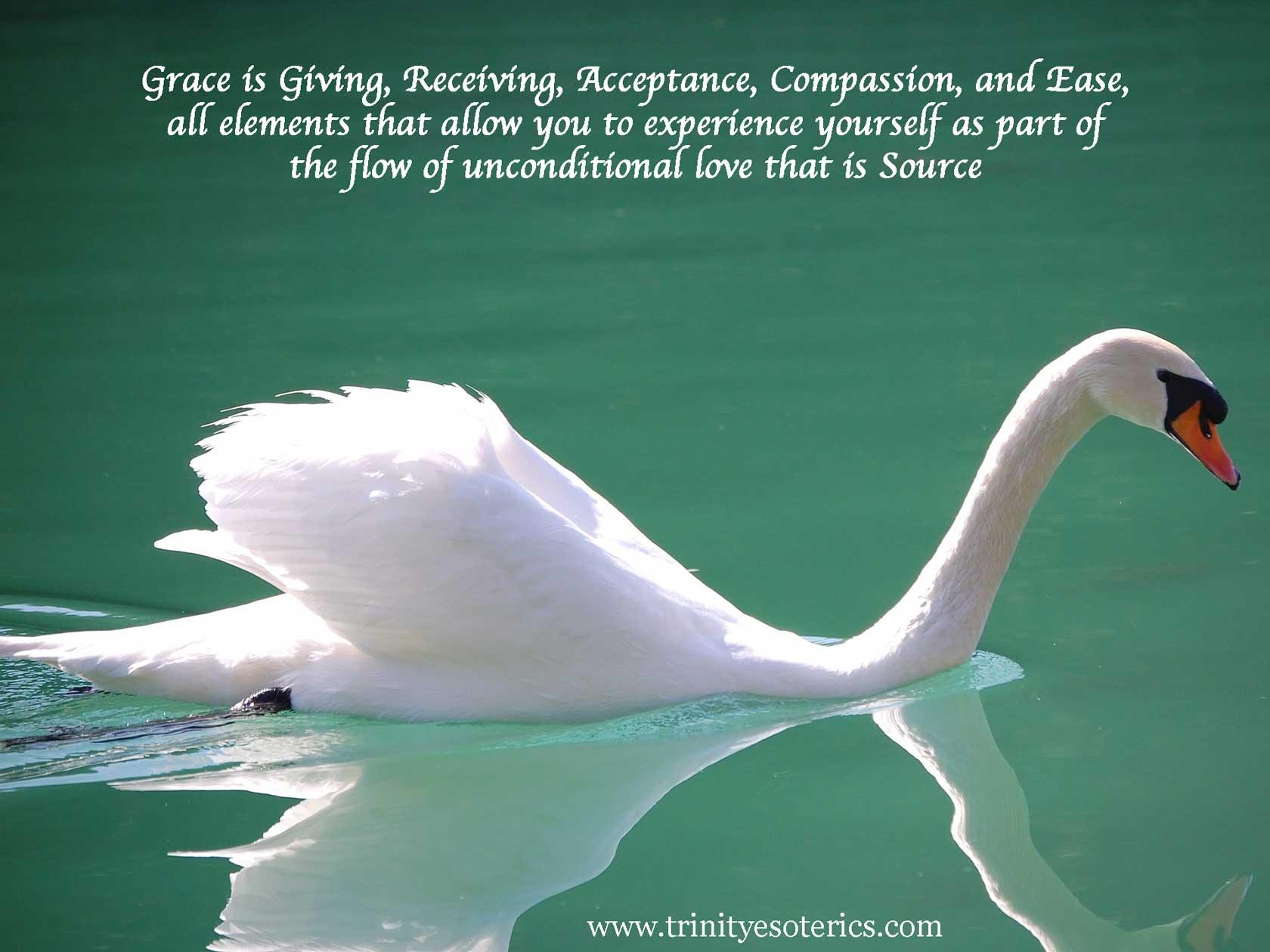 graceful swan in still water trinity esoterics
