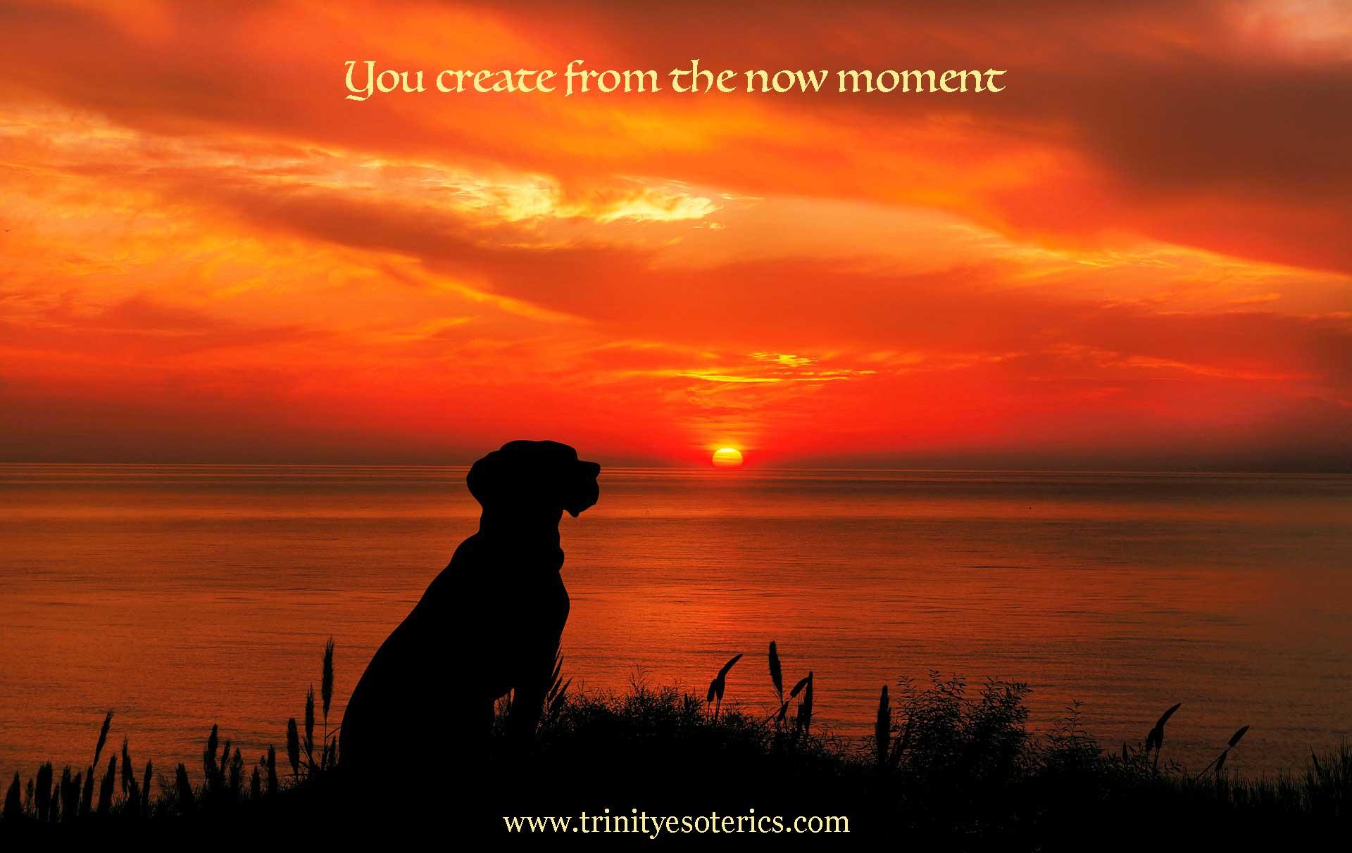 dog at sunset trinity esoterics
