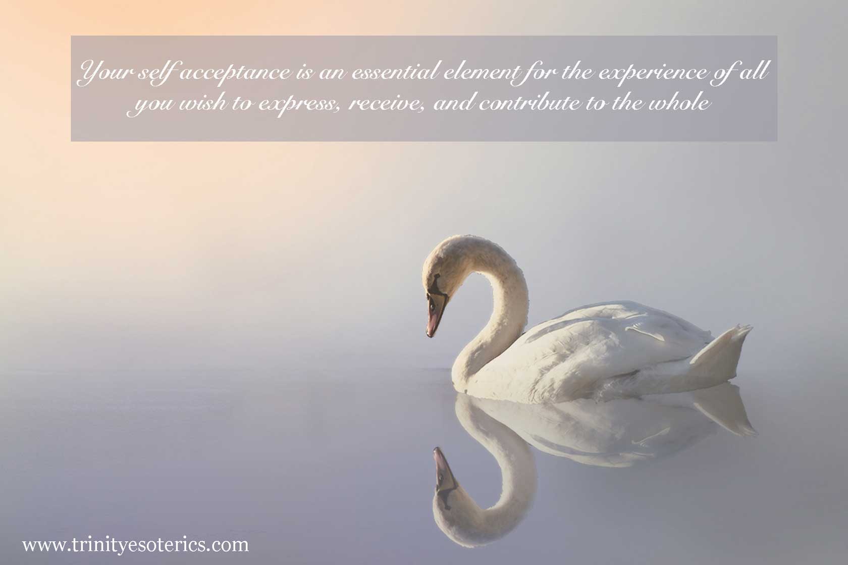 swan with reflection trinity esoterics