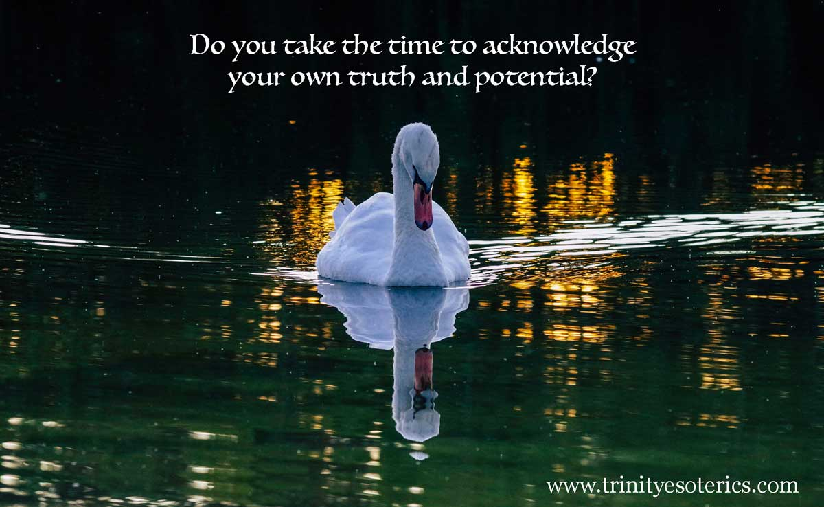 swan looking at reflection trinity esoterics