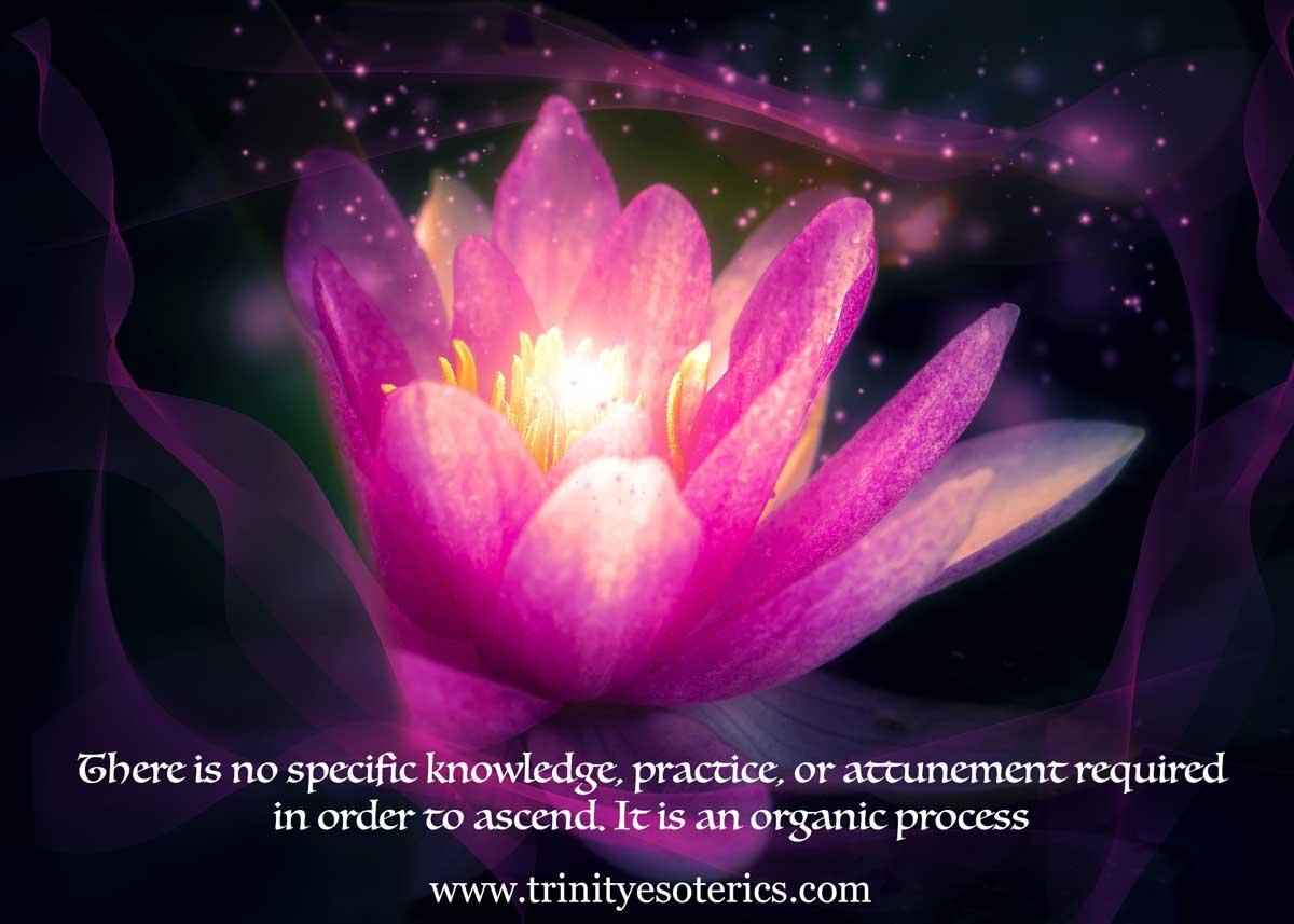 mystical lotus flower trinity esoterics